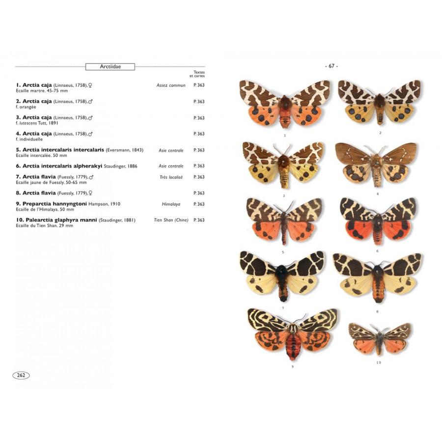 Papillons de nuit d 39 europe volume 1 bombyx sphinx ecailles nap editions - Signification papillon de nuit ...