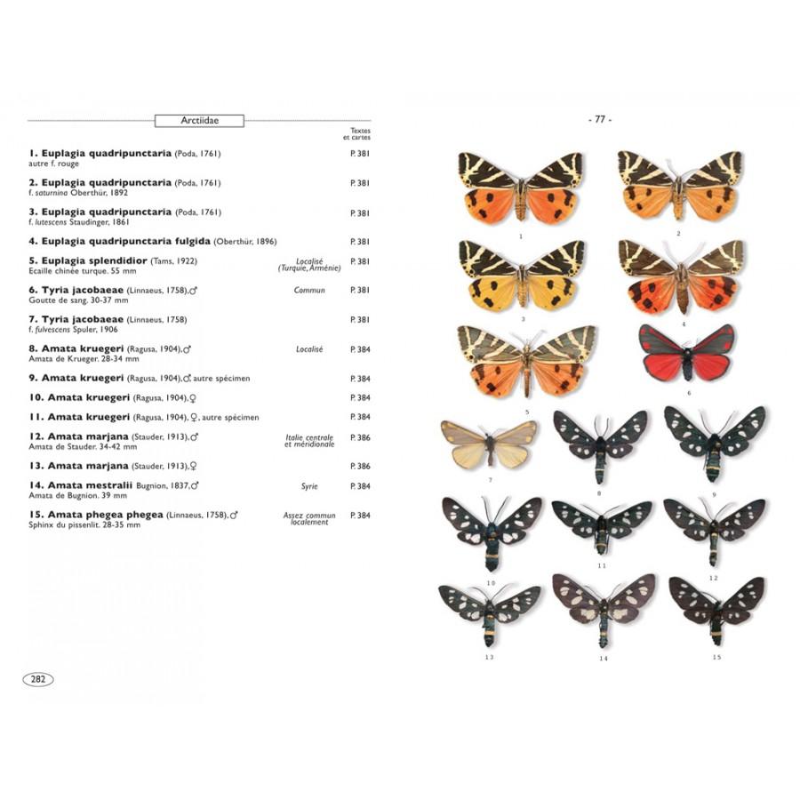 Papillons de nuit d 39 europe volume 1 bombyx sphinx ecailles nap editions - Invasion papillon de nuit ...