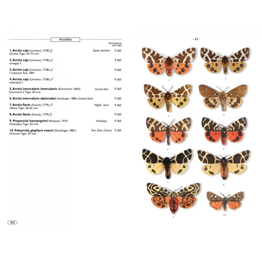 Moths of europe volume 1 saturnids lasiocampids hawkmoths tiger moths nap editions - Invasion papillon de nuit ...