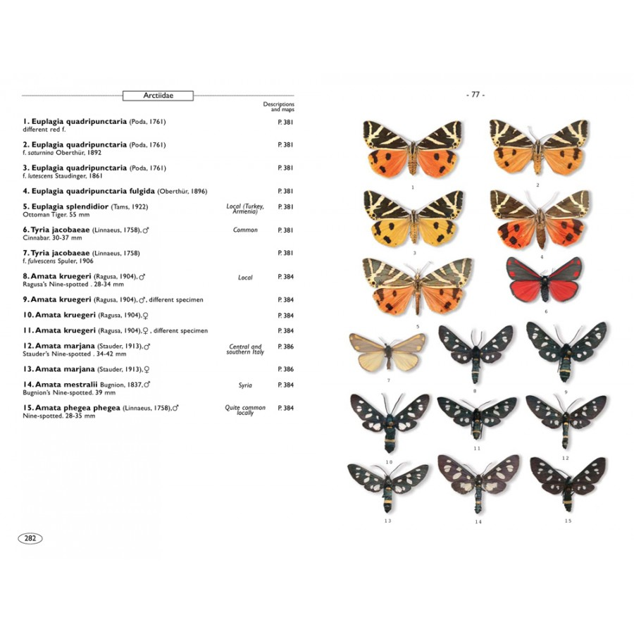 Moths of europe volume 1 saturnids lasiocampids hawkmoths tiger moths nap editions - Signification papillon de nuit ...