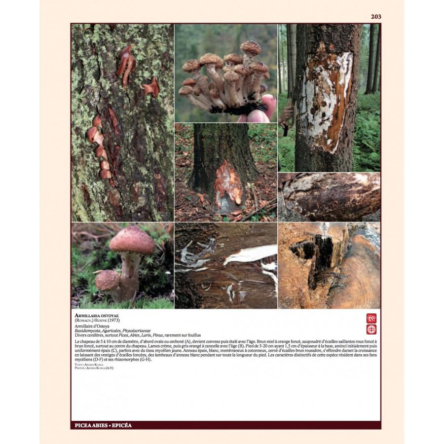 insectes ravageurs et maladies des arbres et arbustes d europe nap editions. Black Bedroom Furniture Sets. Home Design Ideas