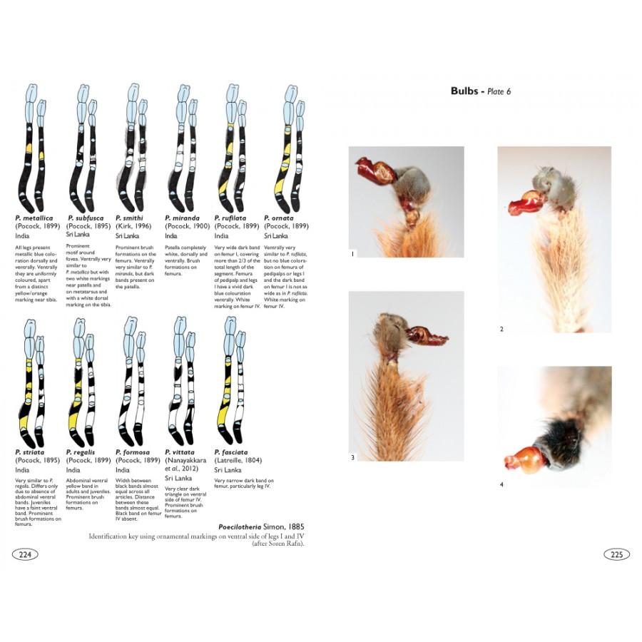 Tarantulas Of The World Theraphosidae Nap Editions