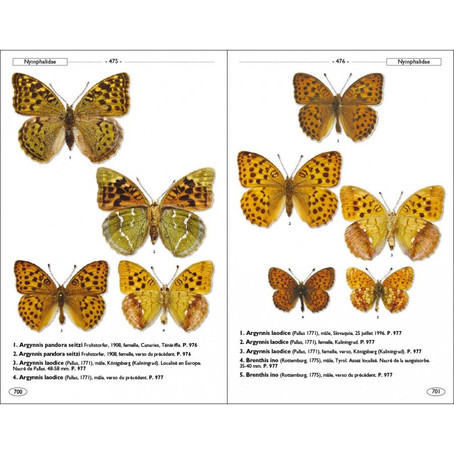 papillons de jour d u0026 39 europe et des contr u00e9es voisines