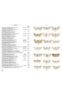 Papillons de nuit d'Europe Vol 4 : Pyrales 2